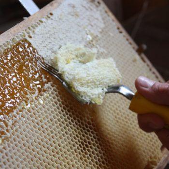 Hongiernte Bienenfacharbeiter