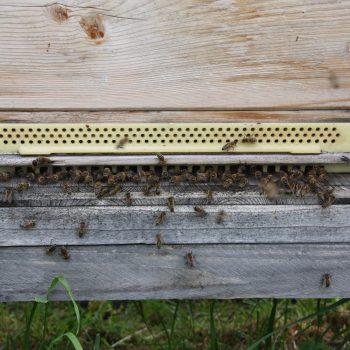 Bienenfacharbeiter