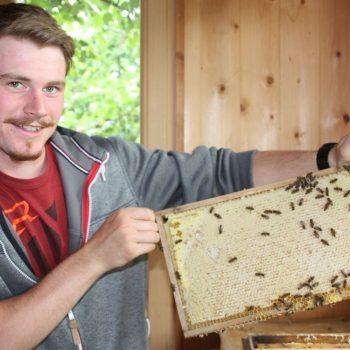 Honigernte Bienenfacharbeiter