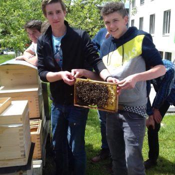 Schüler mit Bienerahmen