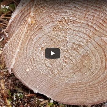 Video Waldwirtschaft