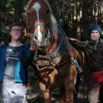 Schüler beim Holzrücken mit dem Pferd
